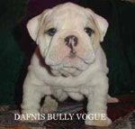 DAFNIS BULLY VOGUE